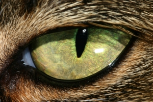 459764_20037420-cat eye std